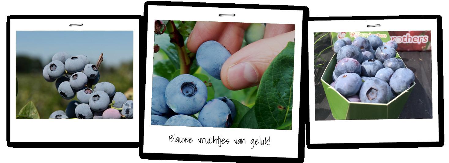 blauwe bessen afbeeldingen