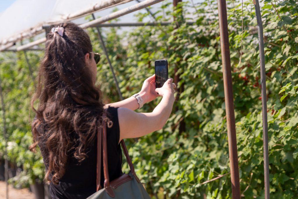 Foto's maken van de rode bessen planten